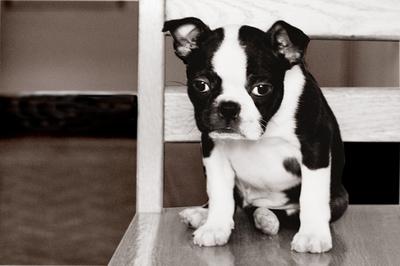 Puppy3_2